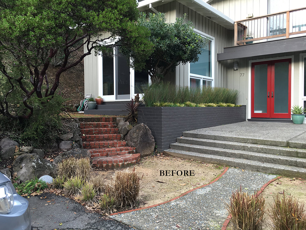 Contemporary Front Garden Renovation Kentfield Ca Dig Your