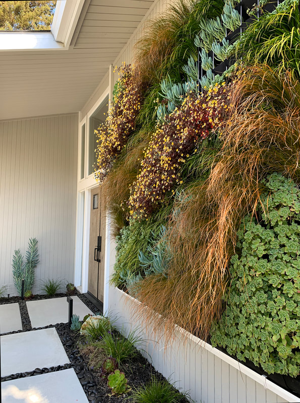 Living Wall and Landscape Remodel Mid-Century Modern Home - Sausalito