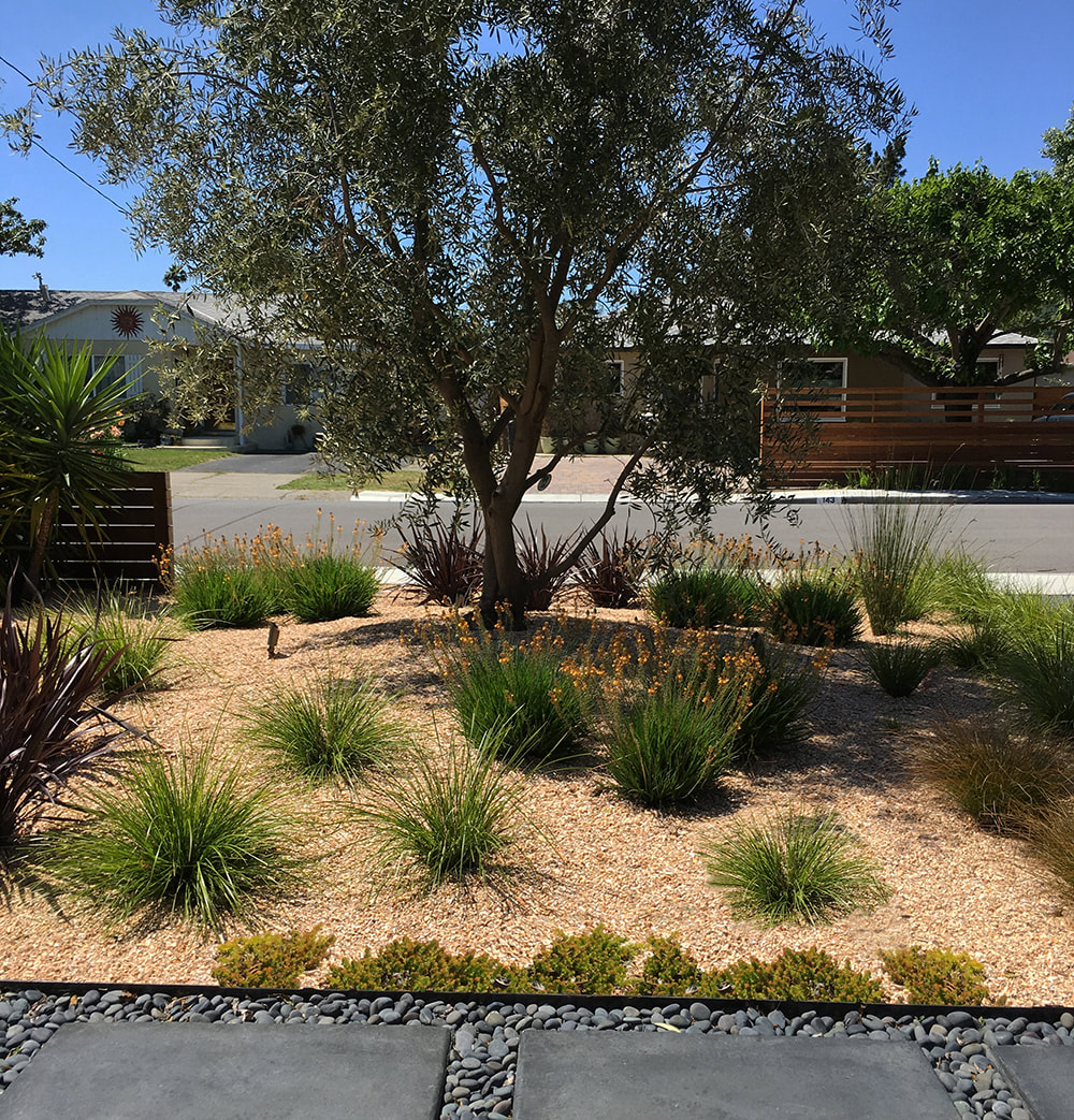 modern san rafael landscape transformation - Dig Your Garden ...